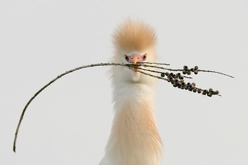 bird - thistle