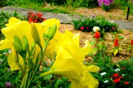 gardenphotos