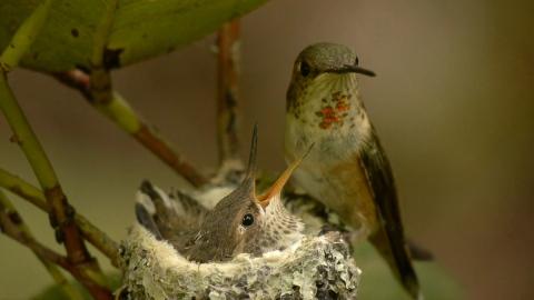 baby bird--12