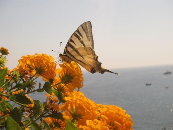 butterfly-flower-ocean